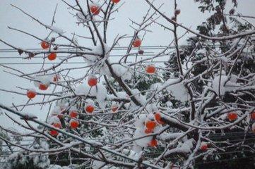 小雪的由来图片