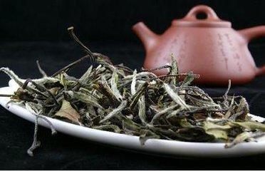 安吉白茶的功效与作用  安吉白茶是一种特殊的安吉白茶,是中国十大著名的安吉白茶品种之一。在中国受到很
