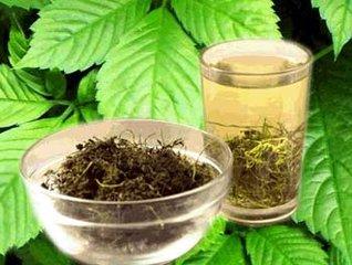 绞股兰茶的功效与作用
