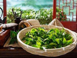 绿茶粉具有比普通绿茶更高的营养价值,因为当你喝绿茶粉时,你会消耗整片叶子,而不仅仅是浸泡过的茶水