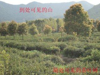 谷雨茶语:曾从顾渚山前过