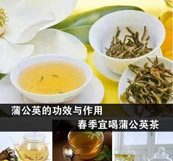 蒲公英茶的功效与作用
