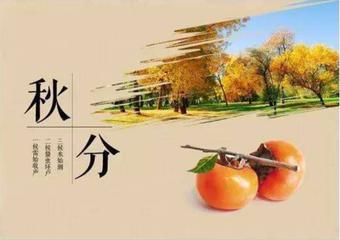 秋分茶语:无我茶会聚岱岳