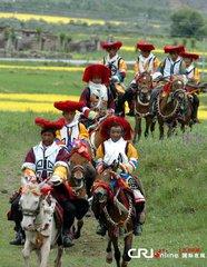 """望果节是藏族人民一年一度祝农业丰收的节日。  """"望""""藏语意思是田地、土地,""""果""""意为转圈,""""望果"""