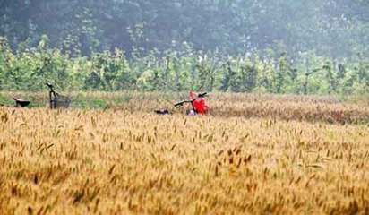 芒种农事安排  芒种即表明小麦等有芒夏熟作物成熟和耕种的最忙季节。此时我国绝大部分地区的农业生产处于