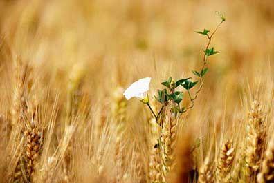 芒种是在阳历的几月