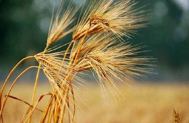 芒种的诗句:惜农人