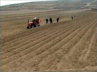 大寒农事安排  大寒时节,全国各地进入农闲。但因天气寒冷,北方地区要注意加强牲畜的防寒防冻;一电要开