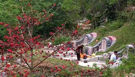 潮州人过清明节,与广东其他地区的风俗活动有所不同,具有浓厚的地方色彩,例如食薄饼、蒸朴松果、扫墓