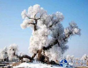 """""""蒹葭苍苍,白露为霜。""""""""漫山红遍,层林尽染。""""是霜降这个肃杀的节气里,饶有趣味的两种意象。霜降"""