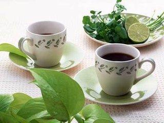 茶多酚作用