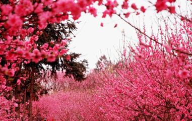 春分的诗句:桃花约图片