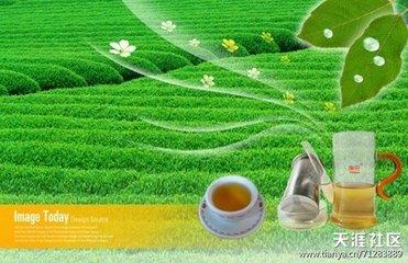 """什么是马黛茶?它是传统上在南美洲消费的类似茶的饮料,在那里它通常被称为""""神之茶""""。出于很好的理由"""