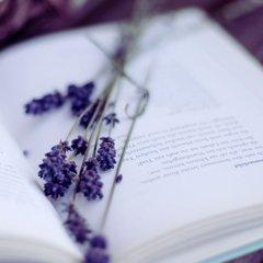 紫风铃木茶