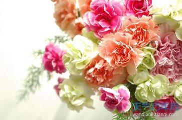 宽容:母亲节的康乃馨