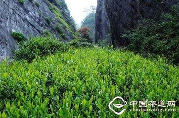 茶叶普及和茶叶产业