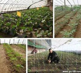 春分农事安排图片