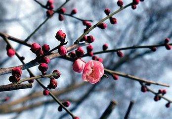 """""""雨水""""和""""惊蛰"""",是二十四节气中""""立春""""后的两个节气。在宋元时期的《月令七十二候集解》里指出:"""
