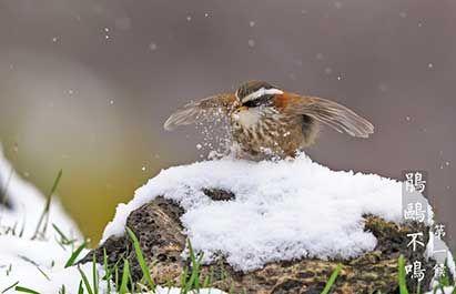 大雪的是什么意思?  二十四节气中的大雪的意思是什么?  它的由来和读法是什么?  大雪是什么时