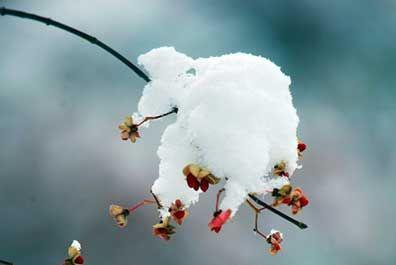 每年11月22日左右小雪。由于北方冷空气势力增强,气温迅速下降,当接近0℃时,雨为寒气所侵,而凝雨为雪
