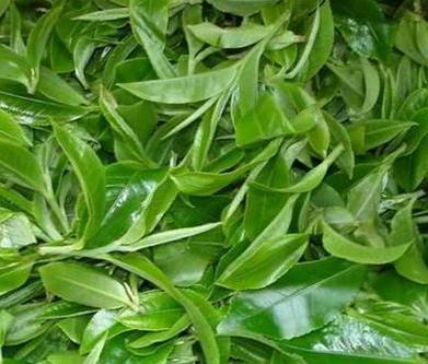 茶叶,现代人日常生活不可缺少的一种饮品。逢年过节,家里来客人,用它来招待客人再好不过。然而,
