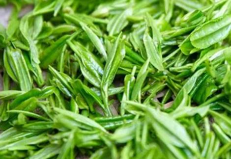 狗牯脑茶属于绿茶吗?是的,狗牯脑茶的制作工艺是拣青、摊青、杀青、初揉、炒二青、复揉、整形提毫、足