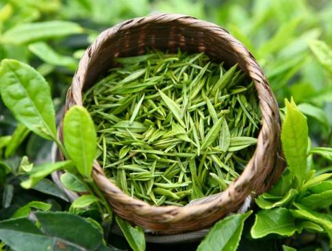 属于绿茶的茶叶有哪些?