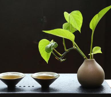 相比较茶,一些人也许更喜欢咖啡,但实际上喝茶的好处远远赶超咖啡。为了纠正大家错误的认知,接下来小