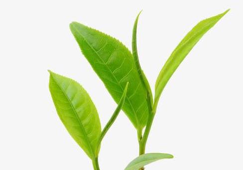 选茶叶的时候应该注意哪些方面?