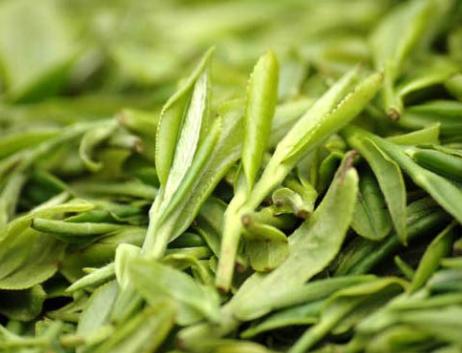 龍井茶是不是綠茶?