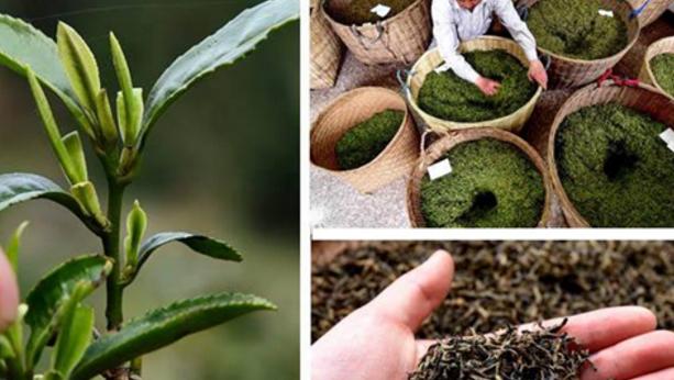 乌龙茶和红茶的制作工艺的区别是什么?