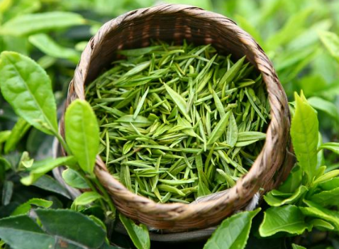 绿茶提取物的功效有哪些?