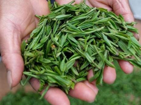 """三分钟让你学会""""春茶""""的正确打开方式!"""