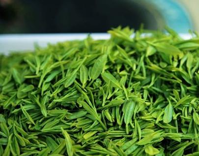 绿茶|新茶与陈茶如何区分?