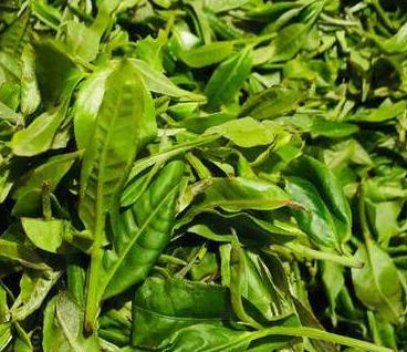 普洱茶对生长环境、制作工艺等都有着很高的要求,特别在繁杂的加工工艺中要是1个阶段出現一点儿小问