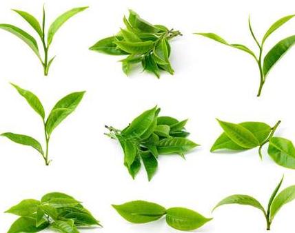 茶叶的好处有哪些?