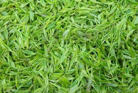在中国的绿茶中,名品可谓最多,不仅香高味且长,品质优异,造型独特,有很高的艺术欣赏价值,绿茶依照
