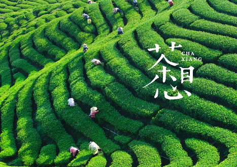 茶叶有哪些种类?