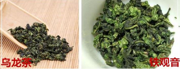 乌龙茶和铁观音的区别是什么?