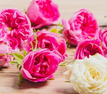 玫瑰茶舒筋活血,美容护肤,常喝玫瑰茶对养神、美容养颜常有益处,最关键的是玫瑰茶结合性十分的强