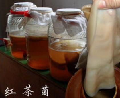 红茶菌,它是红茶的附属产品之一,红茶菌的功效及其作用对人体健康有着极大的好处,并且它的副作用
