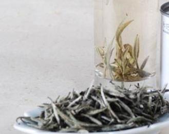 喝白茶的5大副作用!