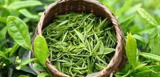 绿茶,是饮用最为广泛的一种茶,它的特点是汤清叶绿。  由于绿茶没有经过发酵,最大程度的保留了茶树