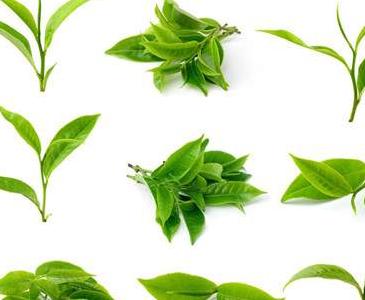 如何准备滇红功夫茶?图片