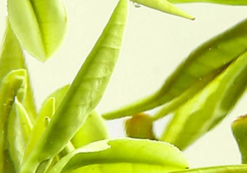 茶叶分为春茶、夏茶、秋茶和冬茶,所以绿茶在春夏秋冬四个季节都会上市。不过对绿茶来说春天上市的茶叶