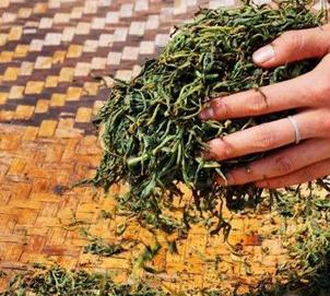 红茶怎样做出来的?且看红茶的加工做法!