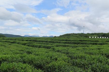 经常喝茶或者解除茶文化的朋友都知道茶叶有很多功效,比如像安神、减肥、生津止渴等等,这些功效几乎是
