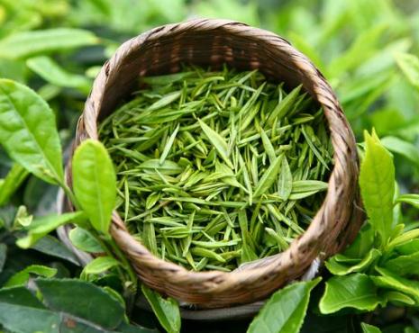 绿茶品质的优劣要如何辨别?