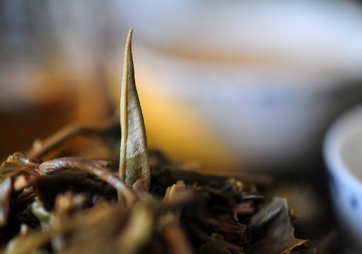 揭示普洱茶和其他茶不同的功效!图片