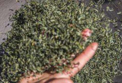 高级的碧螺春,茶芽之细嫩0.5公斤干茶需要茶芽6-7万个。炒成后的干茶条索紧结,白毫显露,色泽银绿,翠